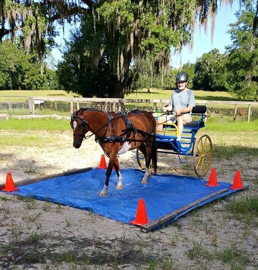 Horse Tip 1292 by Dr. Roses – Randy Cadwell from Tremont Farm on  DesensitizationTechniques