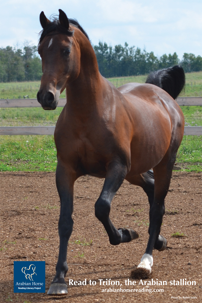 HITM for 05-17-2016 by CHA – Equine Assisted Activities to Enhance Your Horsemanship