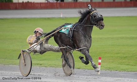 Driving Radio 256 – Harness Racing Young and Old and Spring Vaccines for Horses