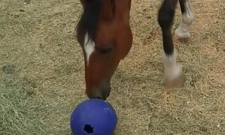 Horse Tip 1261  by Dr. Roses Remedies – Trio of Turnout Tricks to Entertain Your Horse