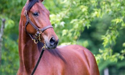 Driving 277 – Standardbred Adoption, Pine Tree and Screw Worms