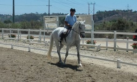Stable Scoop 435 by Horseloverz.com – Auditor Andrew Dickson,  American Endurance and Gatsby Padded Halter
