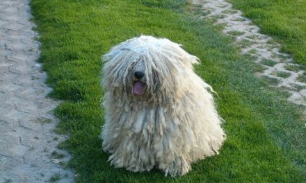 Healthy Critters 27 by Biostar US – TMR Rescue, Party Pomeranian, Puli Dog, Whole Foods for Healthy Joints, Your Fictional Character