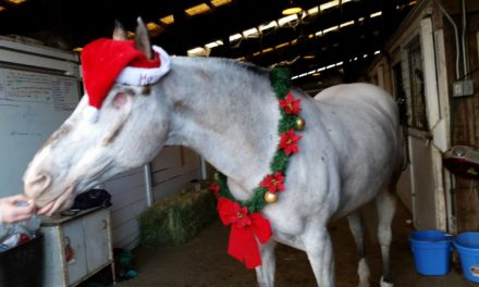 HITM 12-19-2016 by Omega Alpha Equine – Endo the Blind Appaloosa, Horse Nation, Studies Show, Mary Joins Mongol Derby Team