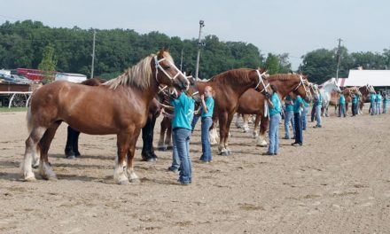 HITM 02-02-2017 by National Clydesdale Sale – Pennwoods Breeding Program, LaPorte Draft Assoic Empowering Youth, Draft Classic Strong in NV County