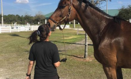 HITM 03-07-2017 Ece Equestrian Jumping – Getting the Most From Training and Exercises for Different Level Riders