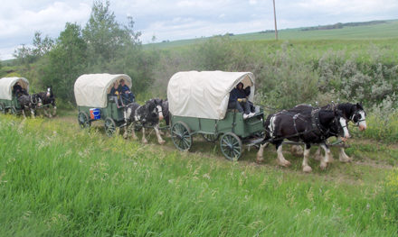Driving 290 – Alberta Wagon Train Adventures and Equo