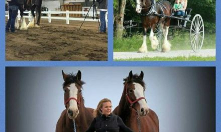 HITM 06-01-17 by 2018 World Clydesdale Show – Bee Tree Trail Carriage Tours, Performance Unlimited Clydesdales, Haugen-Hill Shires