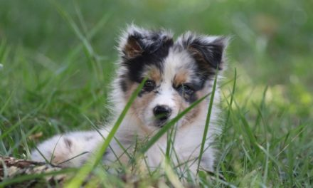 Healthy Critters 46 by Biostar US – Puppy Training with Karen Quinlin Plus Puppy Nutrition and Puppy Do's and Don'ts