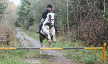 HITM for 10-30-17 – Falconry and Foxhunting in Ireland, Budget Equestrian DIY'er Paradise – by Omega Alpha Equine