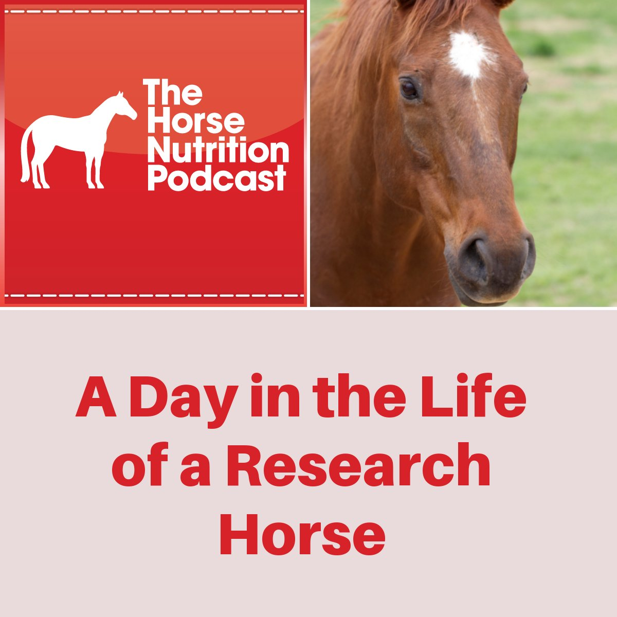 A Day in the Life of a Research Horse, The Horse Nutrition